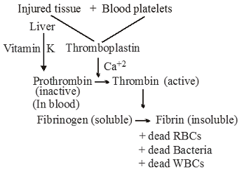 Index of imagesbiology flow chart showing clotting bloodg ccuart Gallery