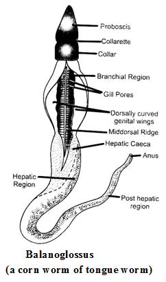 Index of /images/biology